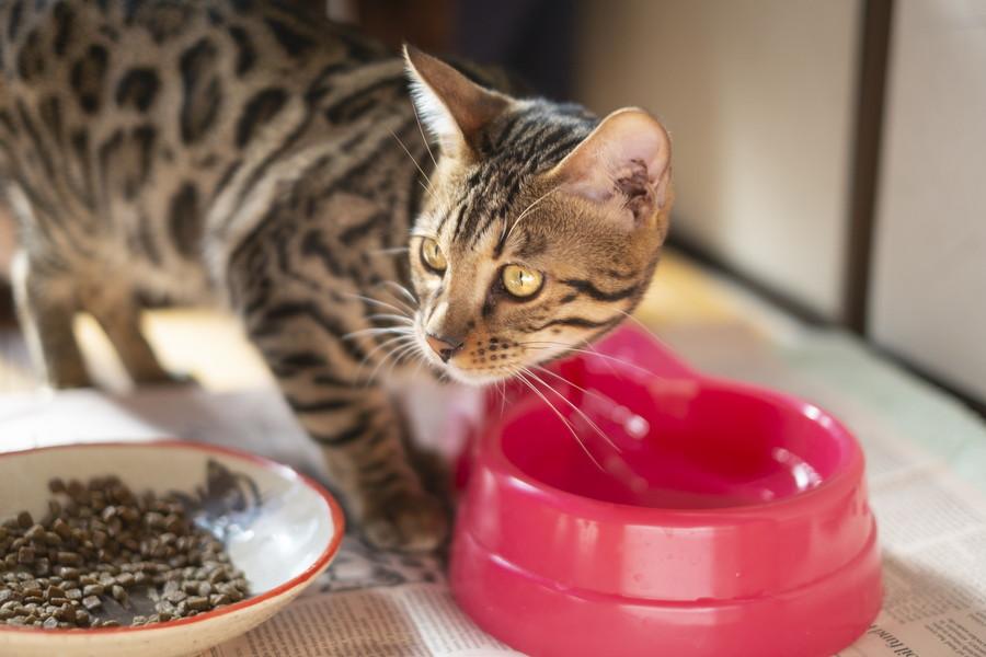 猫に水素水